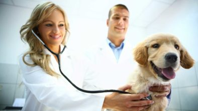 5 Steps to Prevent Intestinal Parasites in Dogs