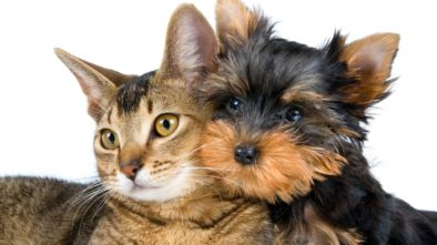 Buying Wholesale Pet Supplies Made Easy