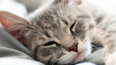 Cats Health The Dos And Donts For Cat-owners
