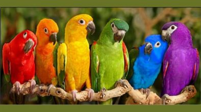 Choosing The Right Pet Bird For Your Little Ones