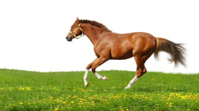 Equine Vibration Platform Is the Best for Training and Rehabilitation