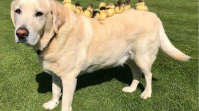 Finding The Best Pet Food Supplies Online