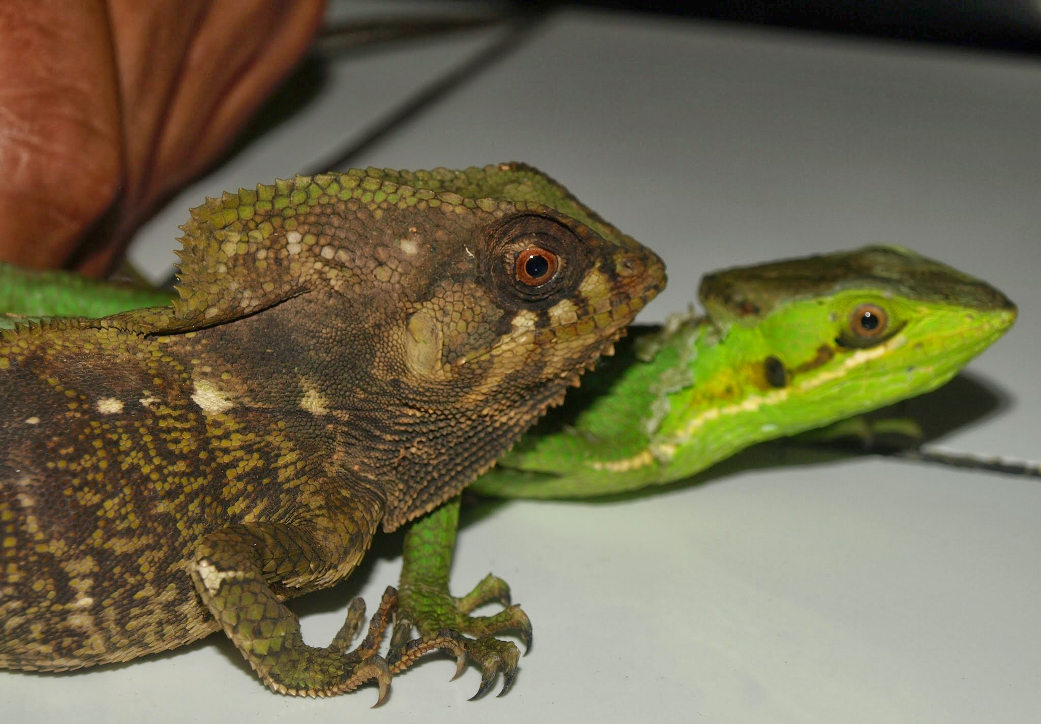 Food For Thought Reptile Food And Eating Habits
