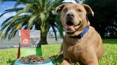 Four Ways You Can Save Money on Pet Supplies This Year