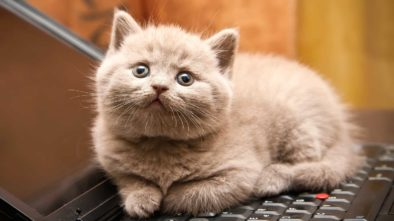 General Vs. Specialized Pet Shops- What's Best For Your Cat?