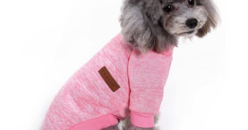 Purchasing Pet Supplies to Make Your Pet Feel Comfortable