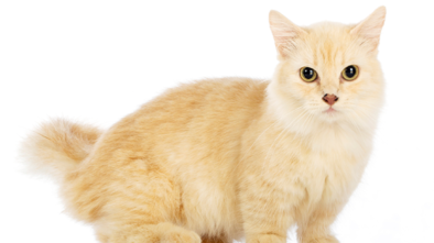 Things You Might Not Know About Your Cat