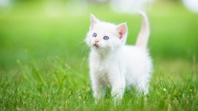 Tips On Training Your Cat Contests You Shouldn't Forget to Enter
