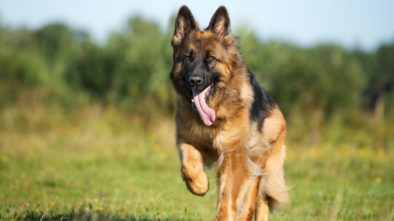 Tips to Ease Your Travelling With Elderly Dogs