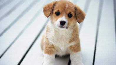 Types of Pet Supplies